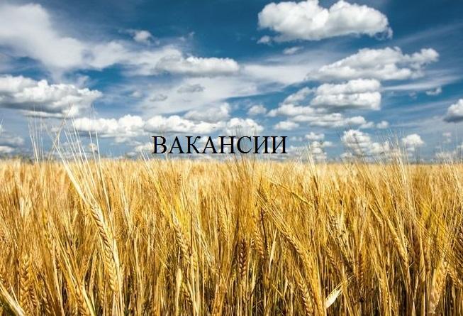 ГУСП «Башсельхозтехника» РБ проводит набор персонала.